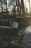 在公园池塘边缘的一个加奶咖啡杯子 库存照片