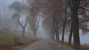在公园河沿的有雾的城市早晨与秋天树 影视素材