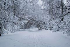 在公园白色树道路风景的飞雪 免版税库存照片