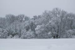 在公园白色树风景的飞雪 库存图片