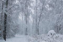 在公园白色树风景的飞雪 免版税库存照片