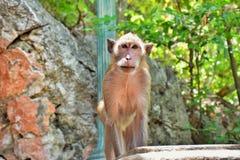 在公园的一只孤独的猴子 库存照片