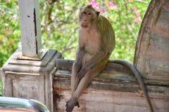 在公园的一只孤独的猴子 免版税图库摄影