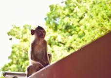 在公园的一只孤独的猴子 免版税库存照片