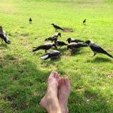在公园的一日 图库摄影