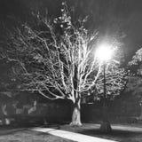 在公园的一棵树 免版税库存图片