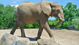 在公园的大象在多伦多,加拿大 库存照片