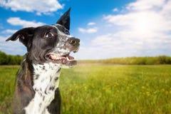 在公园的愉快的狗在晴天 免版税库存图片