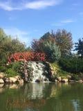 在公园的日 库存图片