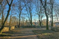 在公园的早晨 免版税库存照片