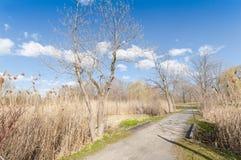 在公园的春天 免版税图库摄影