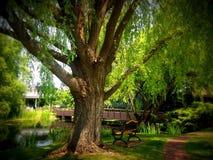 在公园的春天 图库摄影