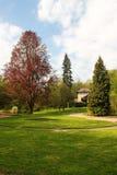 在公园的桃花心木胡同 库存图片