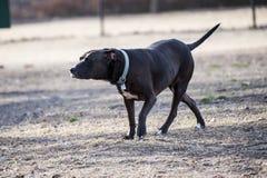 在公园的狗 免版税图库摄影