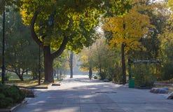 在公园的秋天早晨 免版税库存图片