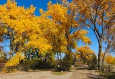 在公园的秋天树 免版税库存图片