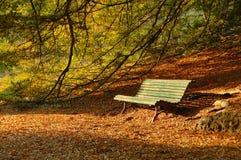 在公园的秋天 库存图片