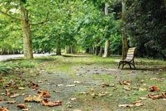 在公园的空的长凳 免版税库存图片