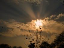 在公园的美好的日落在树后 E 免版税图库摄影
