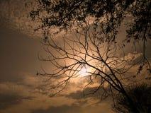 在公园的美好的日落在树后 E 库存照片