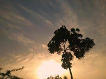 在公园的美好的日落在树后 E 免版税库存照片