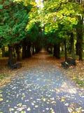 在公园的胡同 图库摄影