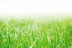 在公园的草 免版税库存图片