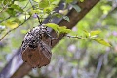 在公园的荫径的黄蜂蜂房 库存图片