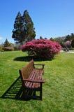 在公园的长凳 库存照片
