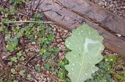 在公园的雨天 免版税库存照片