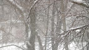 在公园的雪秋天 股票视频