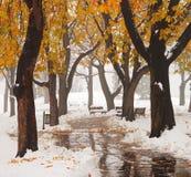 在公园的雪 免版税库存图片
