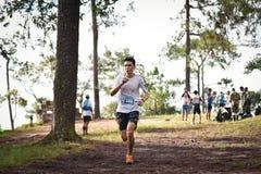 在公园的马拉松适合的人民连续种族 免版税库存图片