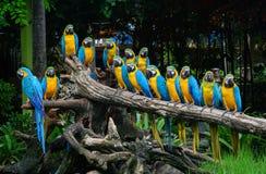 在公园的鹦鹉 免版税库存图片