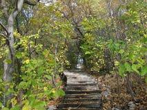 在公园的绕台阶 免版税图库摄影