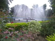 在公园看见的美丽 库存照片