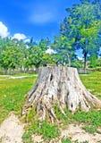 在公园砍树 库存图片