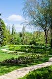 在公园空白夏天的结构树的云彩 免版税库存照片