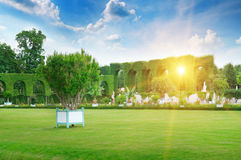 在公园空白夏天的结构树的云彩 免版税图库摄影