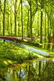 在公园筑成池塘在有五颜六色的花的春天 库存图片
