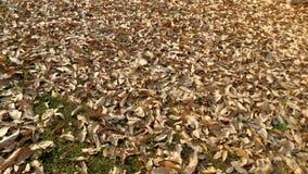 在公园纹理的干燥叶子 免版税库存图片