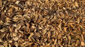 在公园纹理的干燥叶子 图库摄影