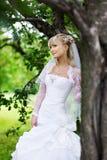 在公园结构树婚礼附近的美丽的新娘&# 免版税库存照片