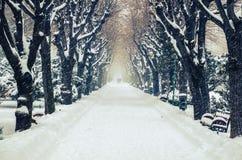 在公园胡同的积雪的树 免版税库存图片
