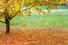 在公园草坪的秋叶在树下 库存图片