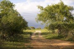 在公园视图的kruger国民 免版税库存照片