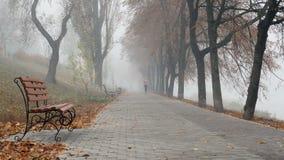 在公园跑的妇女在有雾的秋天早晨 股票视频