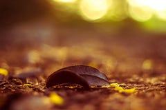 在公园路径的秋叶 图库摄影