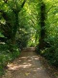 在公园远足足迹的步行道路在水道在Woking,萨里 免版税库存图片