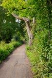 在公园远足足迹的步行道路在水道在Woking,萨里 免版税图库摄影